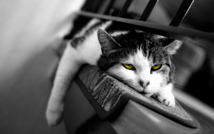 Puisque chat griffe, autant lui donner de quoi faire ses griffes…