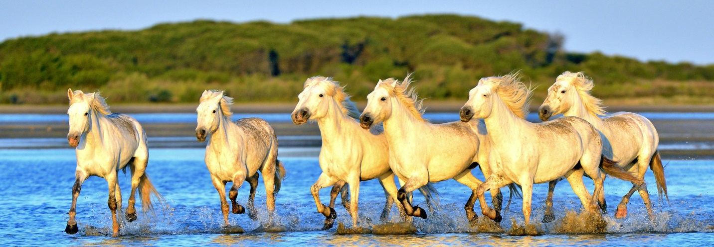 The Camargue is a great place to go when visiting Provence